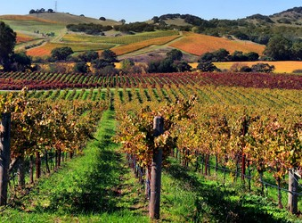 If I had $100…I would buy at LCBO Vintages