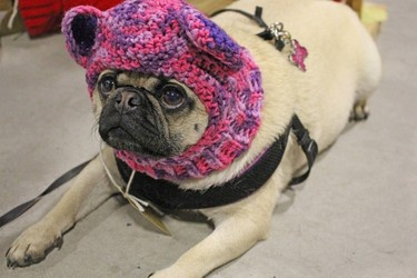 Hats Enough Creations Makes Ethical Dog-Wear Trendy