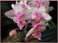 Come to the Ottawa Orchid Show!