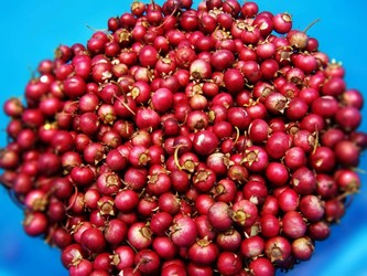 Discover Canada's REAL Cranberry in The Muskokas