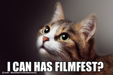 Just For Cats: One-of-a-Kind Festival Celebrates All Things Feline