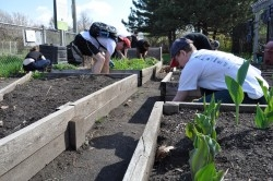Vegetables, fruits, flowers, tea and herbs are grown on the community garden plots.
