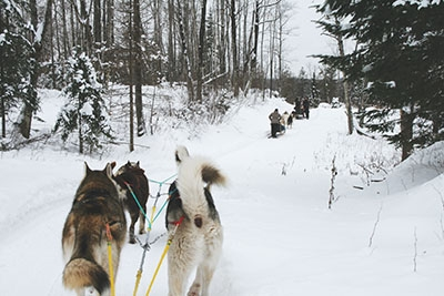 Dog sledding with Expédition Wolf.