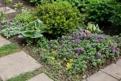 Ellie's garden.
