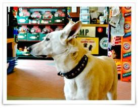 Dog Grooming Classes Ottawa