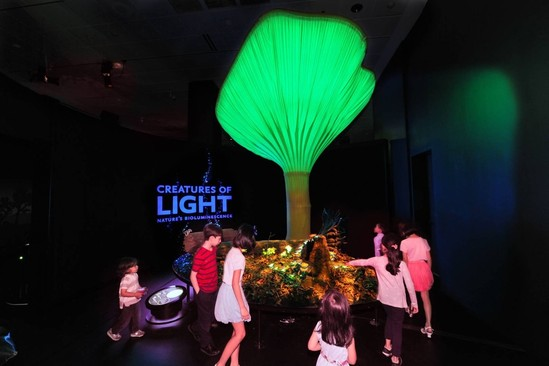Almost Science Fiction:  Creatures of Light Makes Canadian Debut at the Canadian Museum of Nature