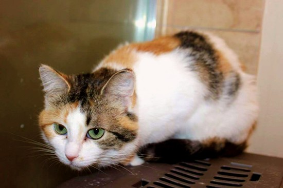 OLM Pet of the Week - Meet Amelie