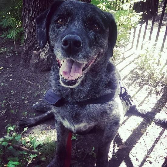 OLM Pet of the Week- Meet Zoey