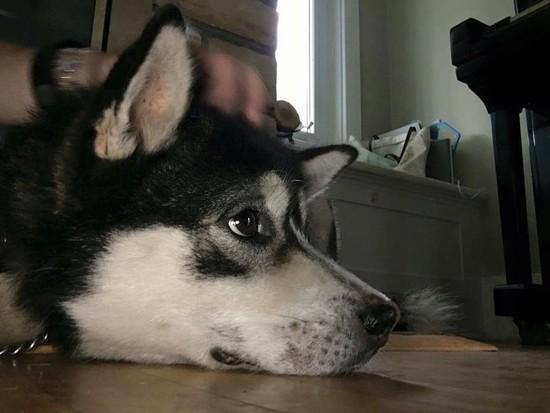 OLM Pet of the Week- Meet Gino