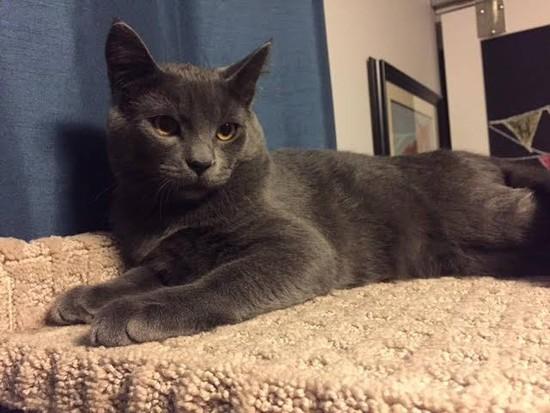 OLM Pet of the Week- Meet Hansel