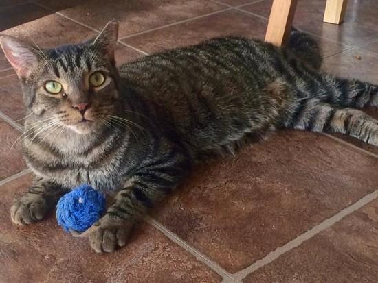 OLM Pet of the Week- Meet Corkery