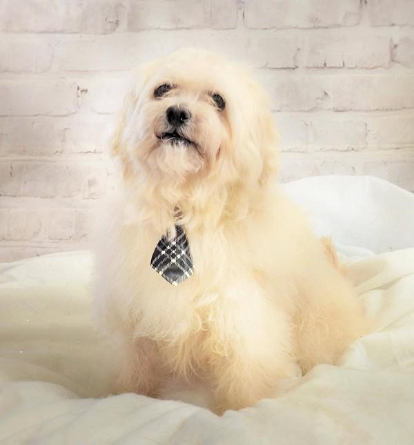 OLM Pet of the Week- Meet Parker