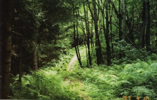 Hidden Surprises in Gatineau Park
