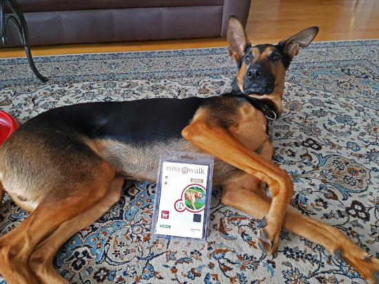 Bayne's Best Pick: Solve Your Dog's Pulling Habits with PetSafe's Easy Walk Headcollar