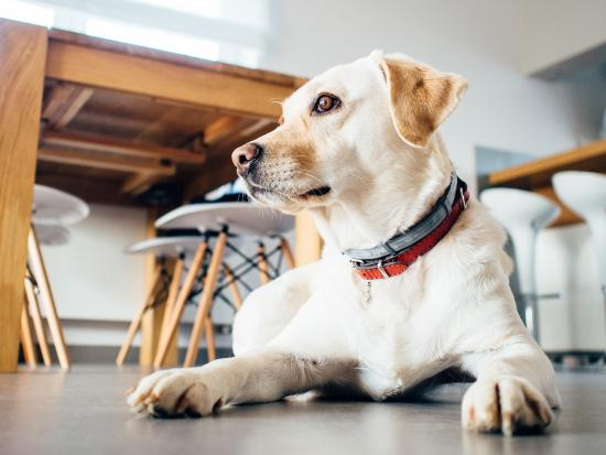 Tips to prepare your home for a new pet