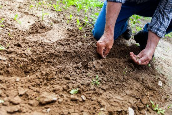 Be smart and safety conscious when planting trees