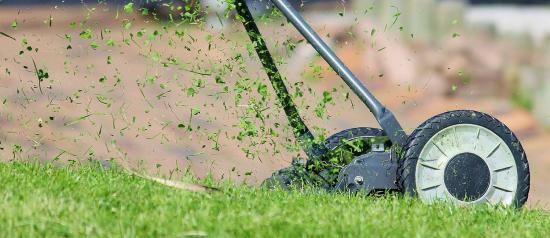 What's in a healthy lawn?