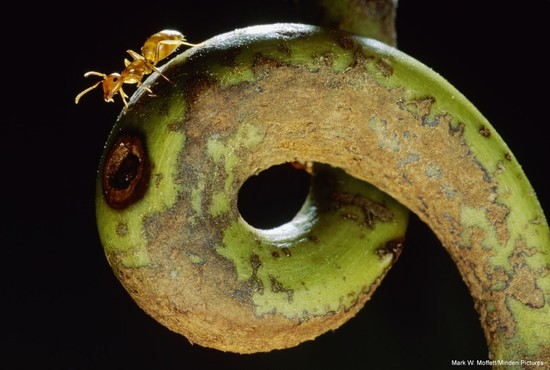 Farmers, Warriors, Builders: The Hidden Life of Ants…first time in Canada! Amazing photo exhibition from the Smithsonian about ants comes to the Canadian Museum of Nature
