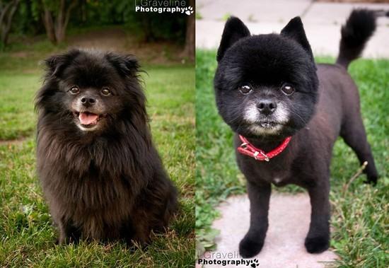 OLM Pet of the Week- Meet Hakuna and Matata