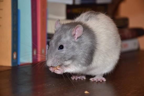 OLM Pet of the Week- Meet Stuart & Charlie