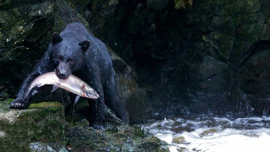 The Winners of the Canadian Wildlife Photography of the Year Contest