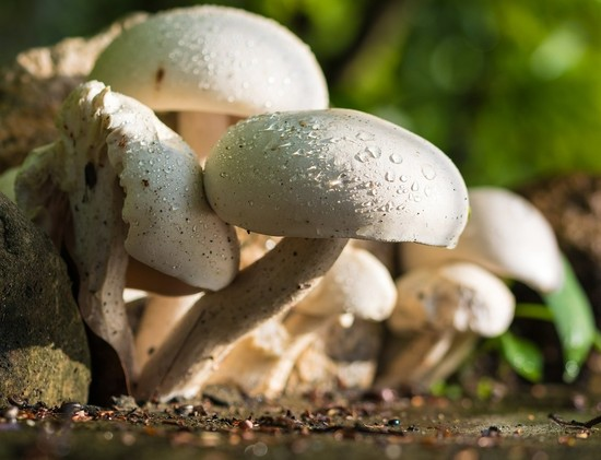 Mushrooms To Boost Your Immune System