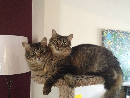 OLM Pet of the Week- Meet Pin and Pip