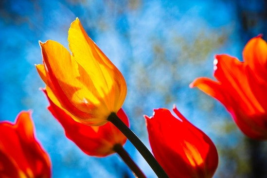 The Art Within the Tulips