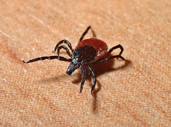 Avoiding ticks in the Ottawa area