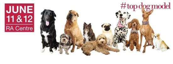 Ottawa Dog Festival is Coming