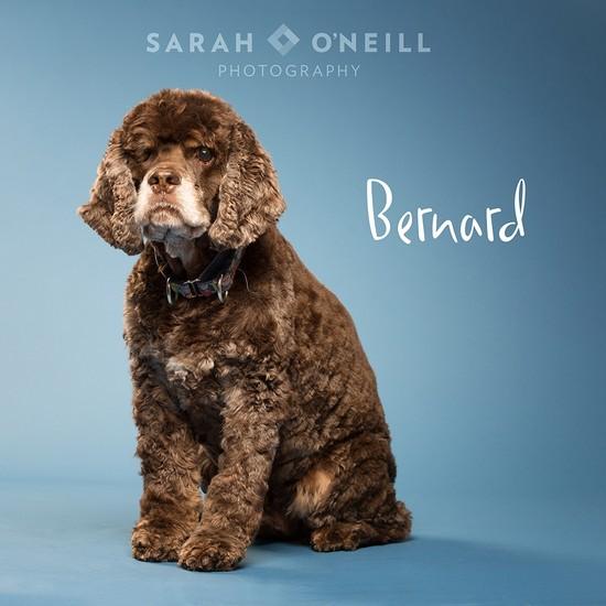 OLM Pet of the Week- Meet Bernard