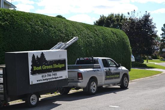 Best Green Hedges — growing in spite of the pandemic