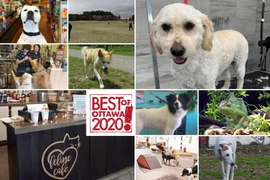 Best of Ottawa 2020: Places for pets