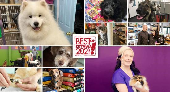 Best of Ottawa 2021: Pet shops, groomers & daycares