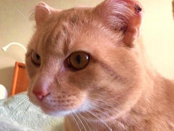 OLM Pet of the Week- Meet Buster