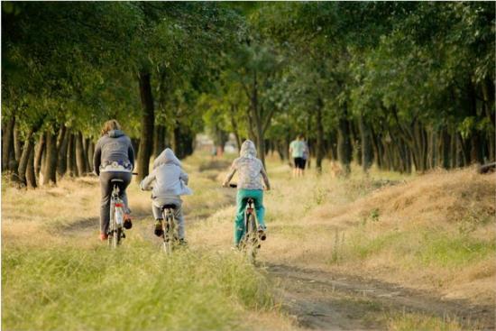 Coronavirus safe family activities to fill your summer