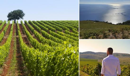 A little taste of Croatian wine country from the comfort of home