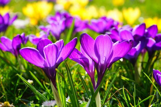 Celebrate the Spring Season in Ottawa