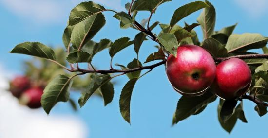 From Bloom to Bottle: Farmgate's Craft Cider
