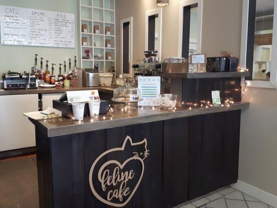 """""""Drink coffee, save cats"""": The Feline Cafe celebrates one year"""