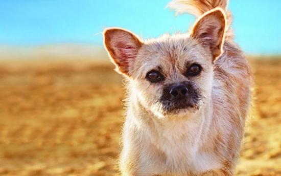 Finding Gobi: A Little Dog's Big Journey to Find a Family