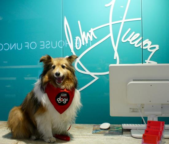 Fluevogs For Therapy Dogs