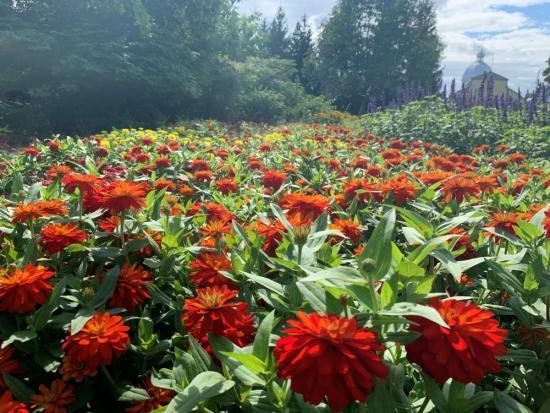 Ottawa's gardens: discover the top hidden gems