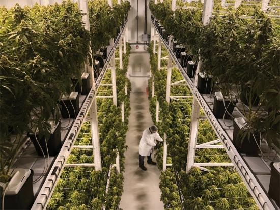 How Organigram turned cannabis into an all-Canadian experience
