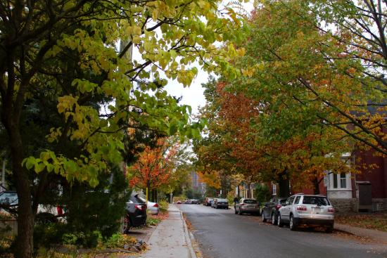Neighbourhood Spotlight: Sandy Hill