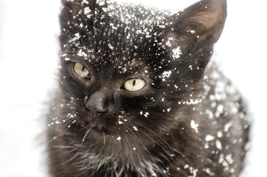 Help Save Lives This Winter With Ottawa Stray Cat Rescue