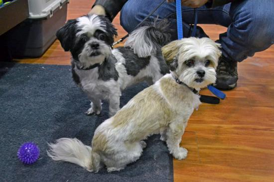 OLM Pet of the Week Special Edition with Bad Tags- Meet Molly & Misty