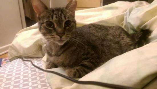 OLM Pet of the Week- Meet Panmure