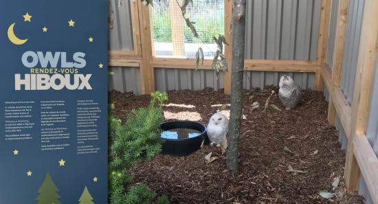 New exhibition at the Museum of Nature brings you up close and personal with owls