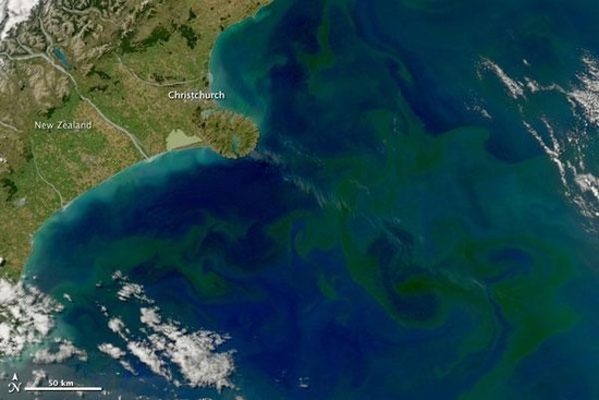 Learning from Phytoplankton